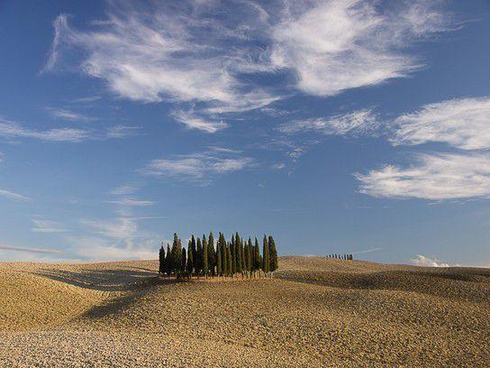 Zypressenwald in der Toscana