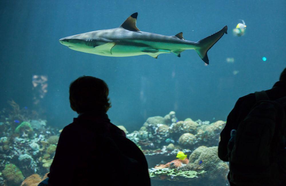 Hai im Aquarium des Tierparks Hellabrunn
