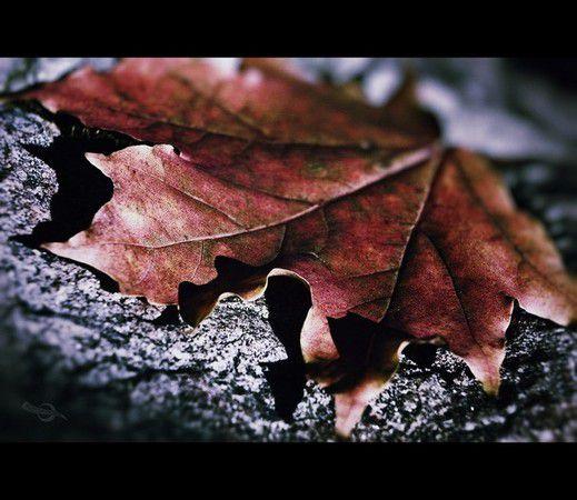 Der Herbst steht vor der Tür