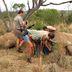 Extreme Zunahme bei der Wilderei
