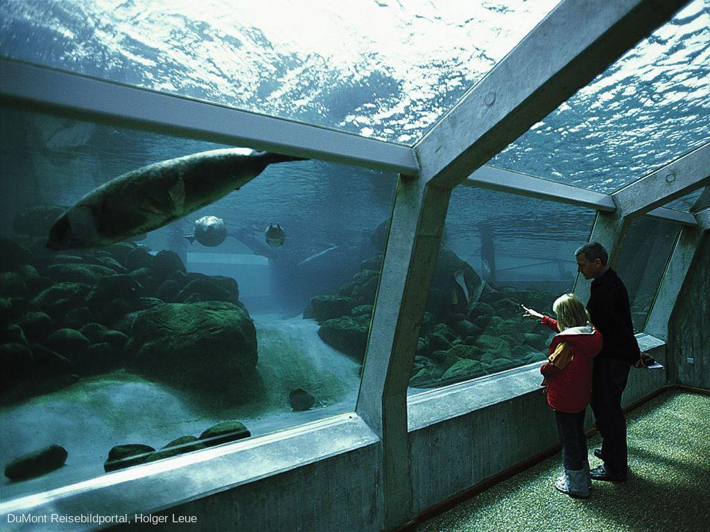 Nordsømuseet - Akvarium & Oceanarium