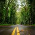 Eukalyptus-Allee auf Kauai