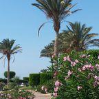 Gartenanlage in dem Resort: La Hacienda
