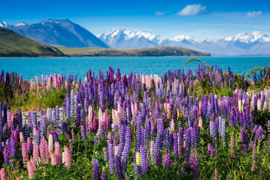 Neuseeland: Sommerferien mit den Einheimischen