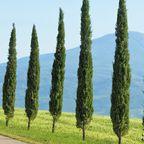 Der Brennerpass und der St.-Gotthard-Tunnel sind die am stärksten befahrenen Strecken der Alpen. Wer sie überquert landet in Italien und ist bald darauf in der Toskana.