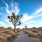 Kaliforniens Top-Sehenswürdigkeiten: Joshua Tree Nationalpark