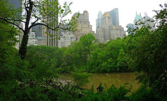 New York 2009, Kontrast von grün zu grau