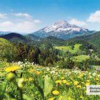 Blumenwiese bei Annaberg