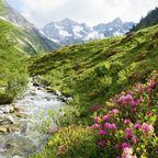 Hochalpin vom Dorf Tirol aus