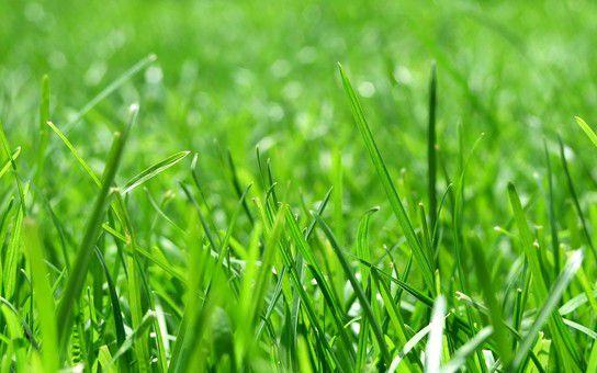 Das grüne Paradies