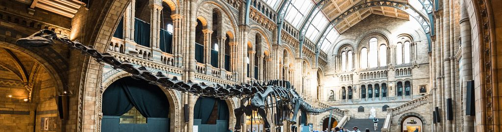 Dinosaurierskelett im Natural History Museum