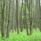 Wald in Sumy