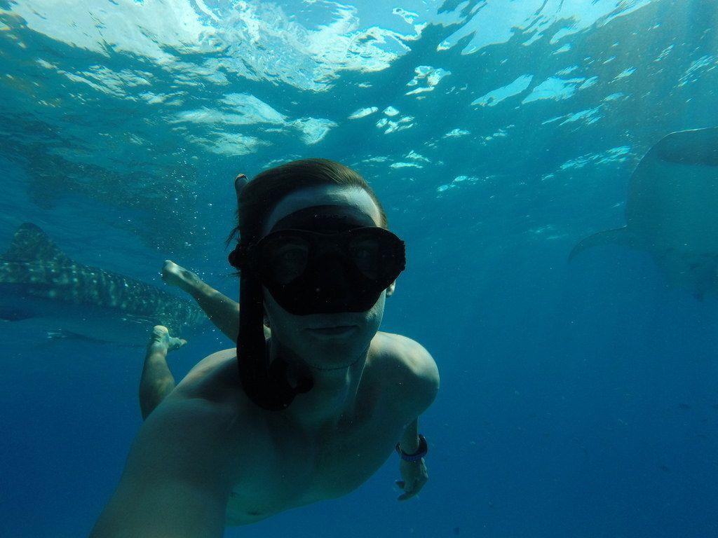 Selfie mit Walhaien auf den Philippinen