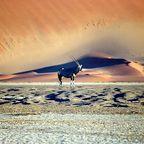 Namibiareise - Leben . . . in der ältesten Wüste der Welt