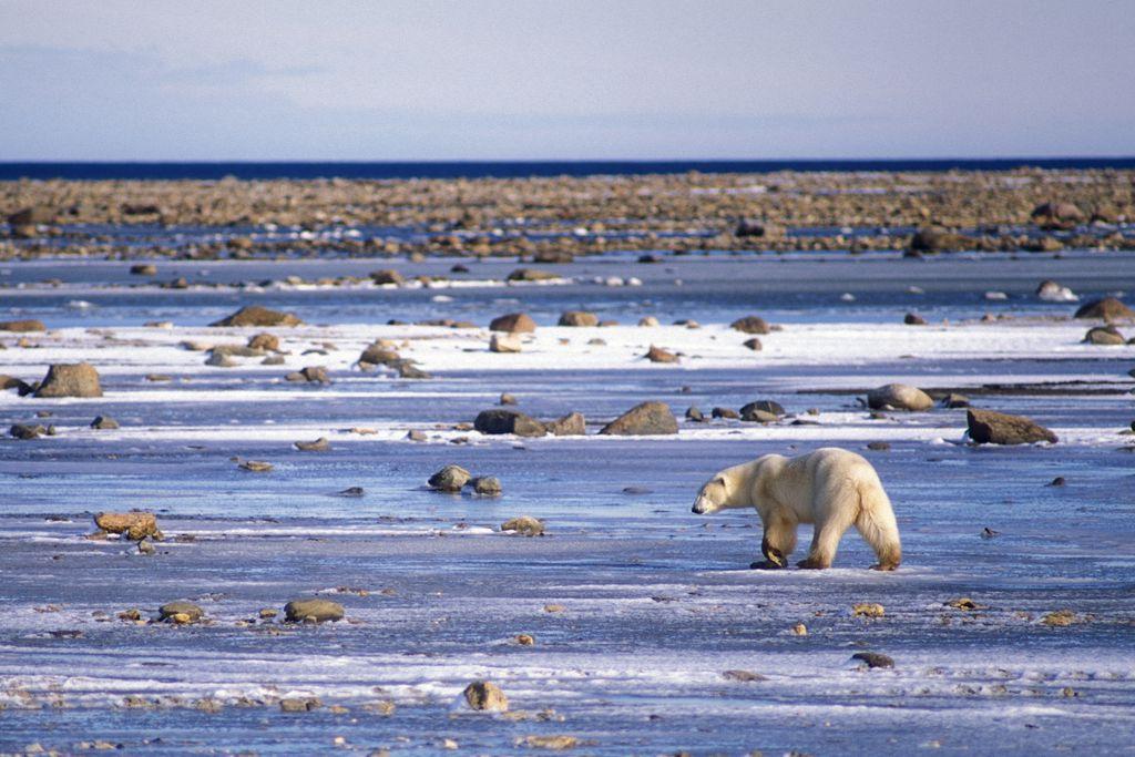 Manitoba: 100.000 Seen und Eisbären warten auf Besucher