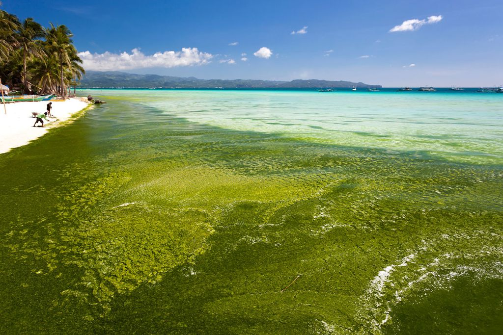 Extremer Algenbefall kann Badestrände zu einer ekligen Angelegenheit machen