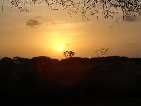 Sonnenuntergang im Hallerpark