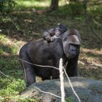 New York für Familien: Umsonst in den Zoo