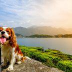 Urlaub mit Hund in Italien