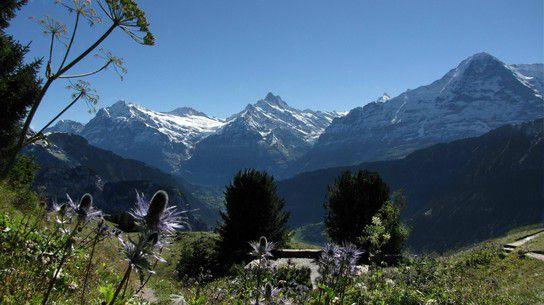 Wundervolle Schweizer Bergwelt