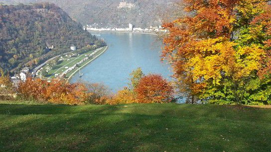 """Der Rhein im herbstlichen """"Kleid"""