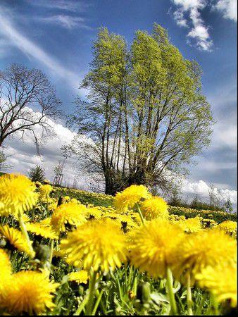 Vorpommern im Frühling