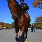 Park Officer