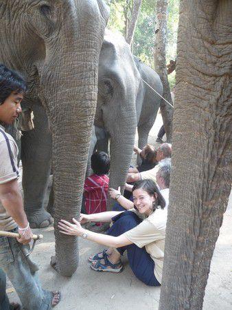 Kennenlernen der Elefanten