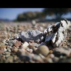 Strand in Phalasarna (Kreta)
