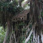 Das Häuschen im Baum