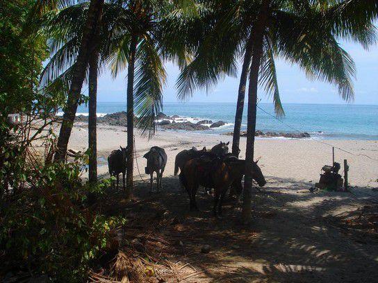 Pferde am Strand von Montezuma
