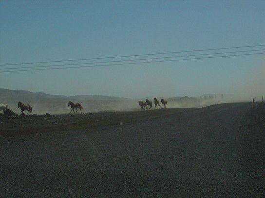 das Land der Pferde