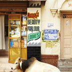 Ruhende Kuh am Straßenrand
