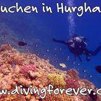 Tauchen Hurghada