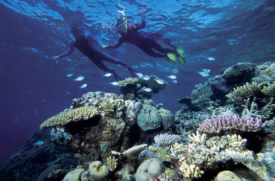 Taucher im Great Barrier Reef