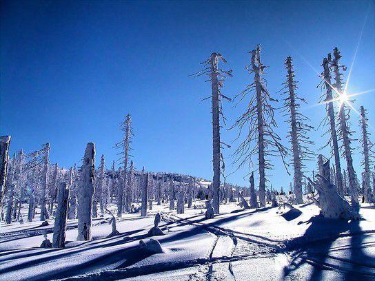 Winter im Riesengebirge