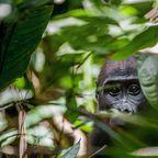 Gabun: Kultur und wilde Tiere jenseits von Touristenströmen