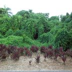 Dschungelblick