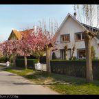 Frühling in DeHaan