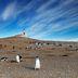 Kolonie von Pinguinen auf der Isla Magdalena