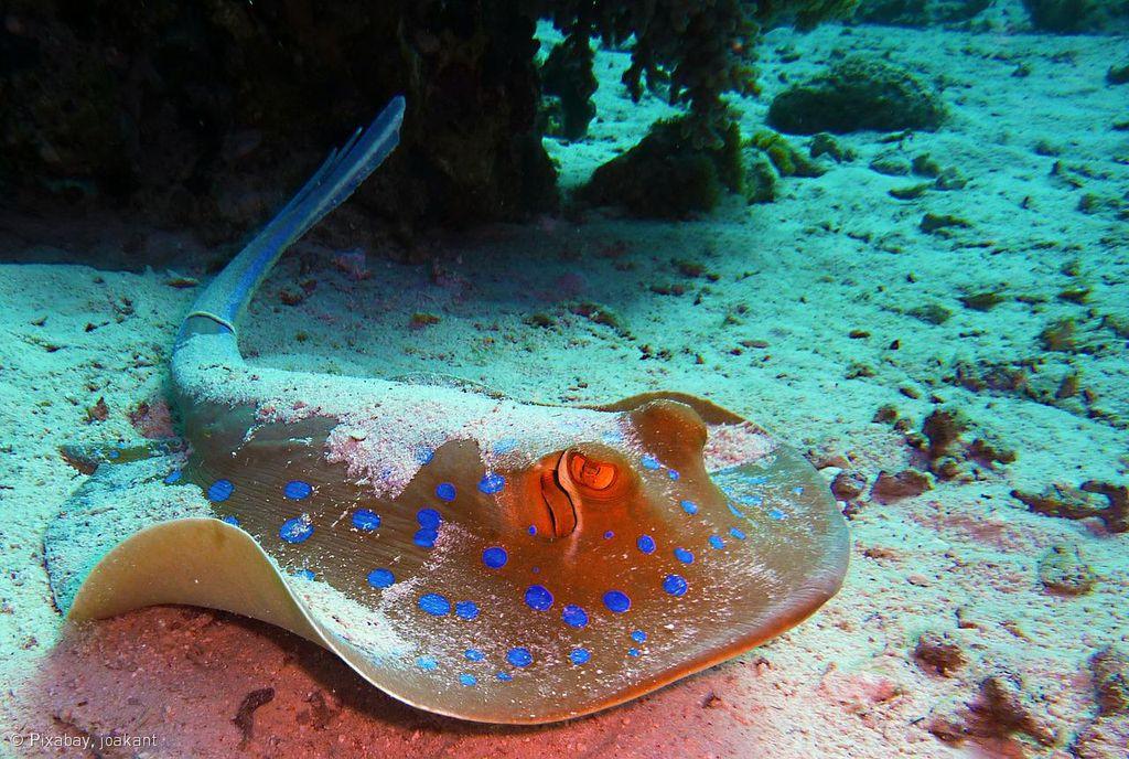 Sea Life Marine Park