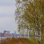 Birke vor Hamburg