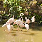 Tropical Islands: Flamingos