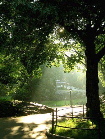 8 am Central Park