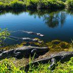 Welterbe in Gefahr: Everglades
