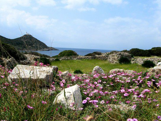 Blumen zwischen den Ruinen von Knidos