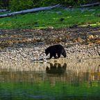 Kanada - das Land der Bären