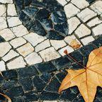 Blätter auf einem Platz in Lissabon