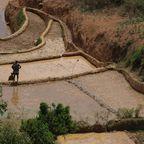 Reisterrassen auf Madagaskar