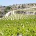 Weinbaugebiet auf Zypern